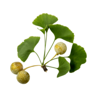 ingredientes_ginko-biloba